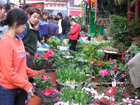 Flowers and Birds Market in Kunming